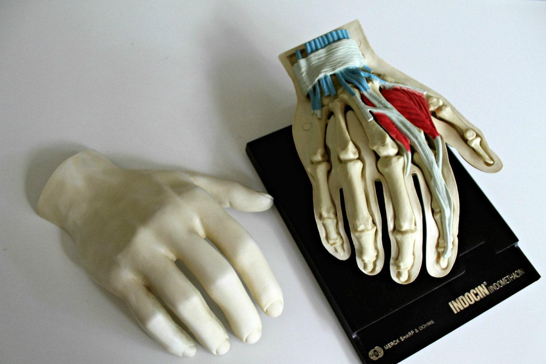 Vintage Medical Human Hand Anatomy Model Merck Sharp And