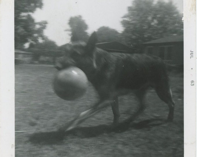 "Vintage Snapshot Photo: ""Bruno"" 1963 [83660]"