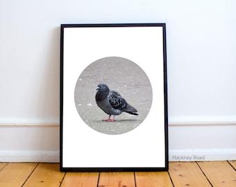 Pigeon animal print, minimalist art,Printable art poster, modern print,animal wall art, grey, nursery art,modern decor
