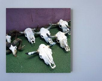 Skulls, Photo on 19x19 cm MDF (Medium-density fibreboard), Wall Art, Home Decor, Limited Edition Photography Prints