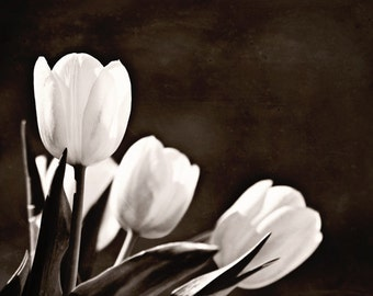 Black and White Photography Flower monochromatic flowers nature wedding home decor women 3 three tulips dark romantic soft spring photograph