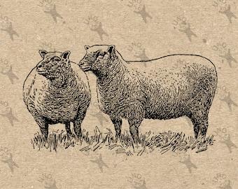 Flock of Sheep Lamb Farm Vintage image Instant Download Digital printable clipart graphic prints transfers tote towel kitchen art HQ300dpi
