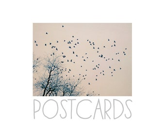 Postcards - Single Card - Blank Cards - Restless - Bird - Nature Photograph - Winter - Trees - Michigan - Pink - Landscape Photography