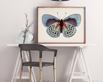 Blue Butterfly Photography Print, Wall Art Print, Nature Photography, Natural History Art, Large Wall Art, Nature Wall Art, Butterfly Photo