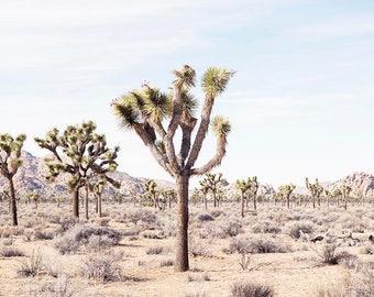 Joshua Tree, Desert Home Decor, Desert Wall Art, Desert Landscape, California, Travel, Wanderlust, California Desert Art, Photography