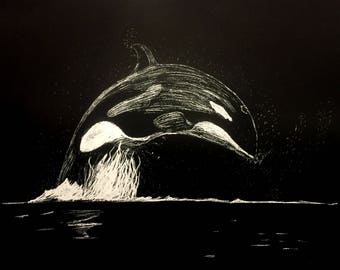 Midnight Orca Migration
