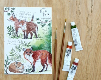 Red Fox Natural Study Print