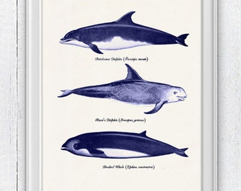 Wall decor poster Whales and dolphins n2-  sea life print- Whales sea side print SAS083