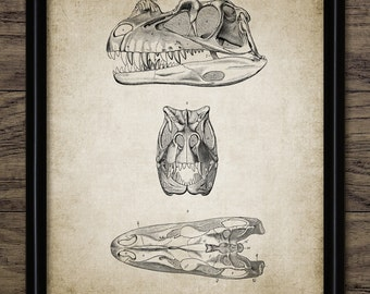 Ceratosaurus Skull Anatomy - Dinosaur Print - Theropod Dinosaur - Paleontology - Extinct Animal Art - Single Print #2183 - INSTANT DOWNLOAD