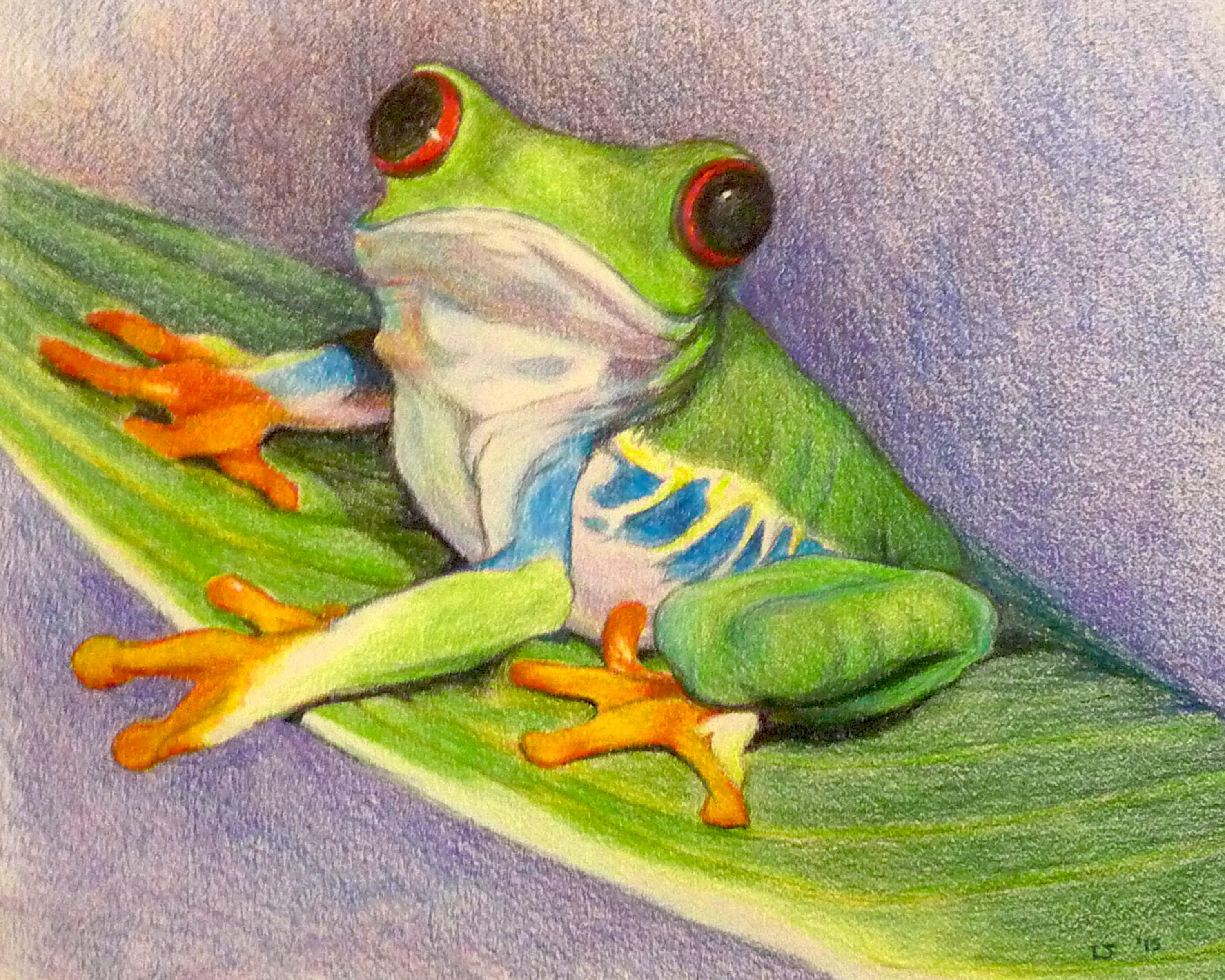 Green Tree Frog colored pencil drawing giclee print