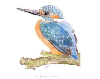 Common Kingfisher Original Drawing