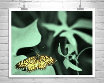 Butterfly Print, Butterfly Art, Insect Art on Canvas, Golden Butterfly Picture, Nature Photography, Gift Picture, Butterfly Gift