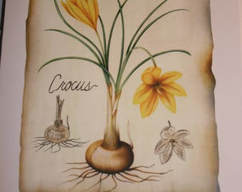 Happy Birthday card with crocus flowers and bulbs, matching envelope and free shipping