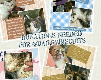 Donations NEEDED for @baileybiscuits