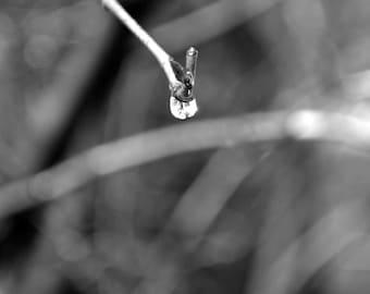 Raindrop - 2009 (4 in x 4 in)