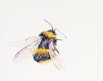 """Watercolor Painting, Giclee Print, Bee, 8""""x10"""""""