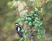 Woodpecker on Ivy // Arch...