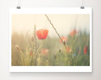 red poppy photograph red flower photograph english garden print red poppy print summer photograph nature photography red flower print
