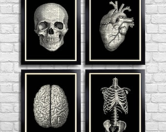Anatomical Set Anatomy Print Set of 4 Medical Wall Art Dictionary Art Prints Gifts for Boyfriend Set of Posters Vintage Anatomy Skull 090