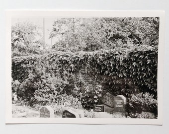 Original Vintage Photograph | Overgrown Cemetery | 1963