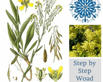 WOAD PROJECT ~ Step by Step ~ Join our group to grow your own
