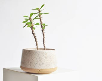 5 Inch Planter - White Speckle - Made to Order