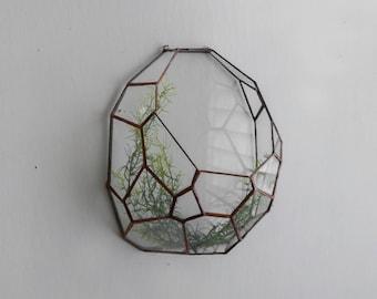 Droplet Wall hung Terrarium