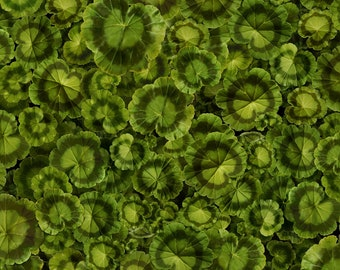 Timeless Treasures - Front Porch - Geranium Leaf - Green - Fabric by the Yard C6379-LEAF