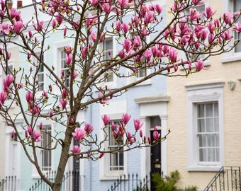 Notting Hill - London Photography - Colourful Houses - Magnolia Tree - Spring Print - Flower Photography