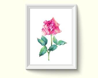 Rose Flower Watercolor Painting Poster Art Print P464