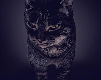 Tabby Cat in ink.