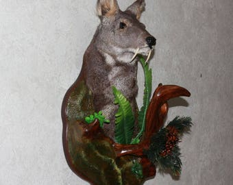 Siberian Musk Deer - Taxidermy Head Shoulder Mount, Stuffed Animal For Sale - Musk-Deer - ST3895