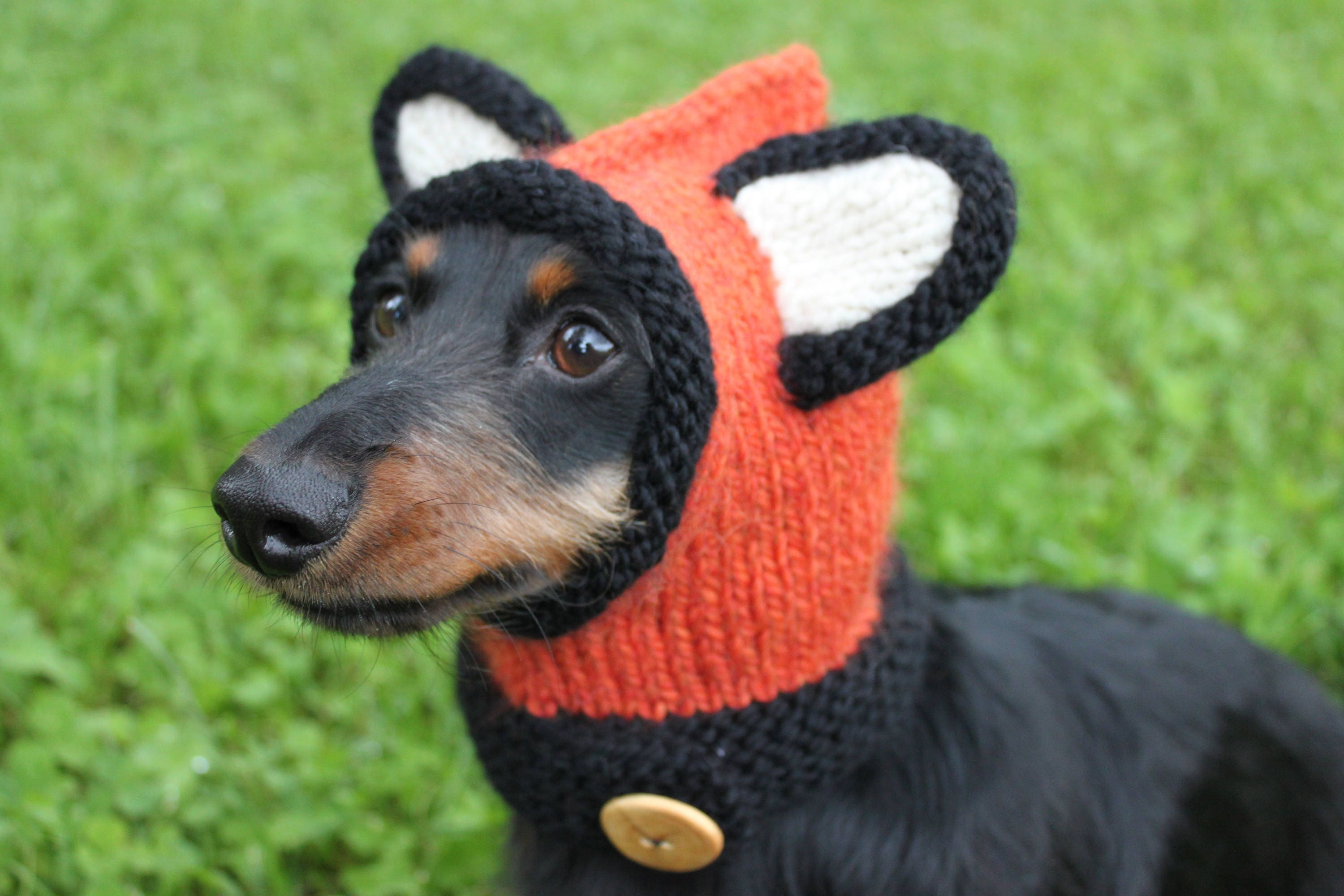 Knitting pattern dachshund fox hood mini doxie hat dog zoom bankloansurffo Gallery