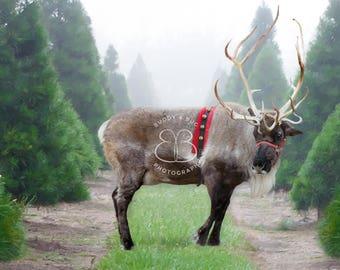 Christmas Tree Farm Reindeer Digital Background