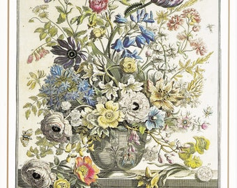 May Winterthurs vintage botanical print 12 month of flowers Robert Furber 7.5 x 10 inches