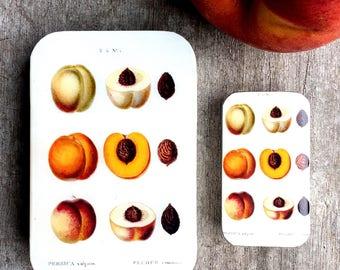 Peach tin LARGE, Botanical tin, notions tin, wallet
