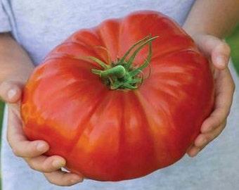 Tomato Plant, German Giant Heirloom Organic
