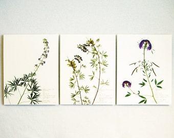 Purple Colorado Wildflowers Botanical Print Set of Herbarium Specimens, Pressed Flowers Prints, Dried Flower Art, 184, 178, 172