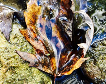 Fall Leaves, Autumn, Falling At Your Feet ~Shwaden Photography