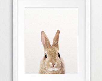 Rabbit Print, Woodland Nursery Decor, Rabbit Photo, Cute Bunny Rabbit, Color Photo, Modern Wall Art, Woodlands Animal, Nursery Printable Art