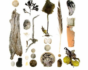 Beachcombing series No.61 - photograph - feather, sand dollars, seaweed, driftwood