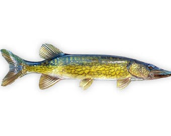 Chain Pickerel Decal, Chain Pickerel Sticker, Chain Pickerel