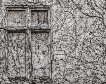 Abstract Photography- Ivy on Old House Wall, Abstract Art Canvas, Black and White Abstract Decor,  Ivy Photo Print, 8x10, 11x14, 16x20,24x30