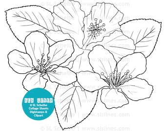 Digistamp flowers hibiscus coloring page, digital stamp flower adult colouring