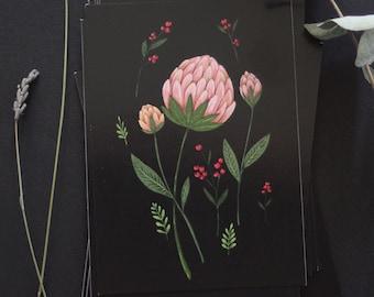 "Postcard - botanical drawing - flower - prothea - floral - botanical frawing  - ""Protheas"""