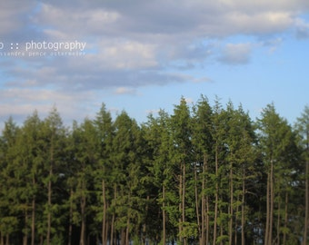 the north woods - limited edition photograph