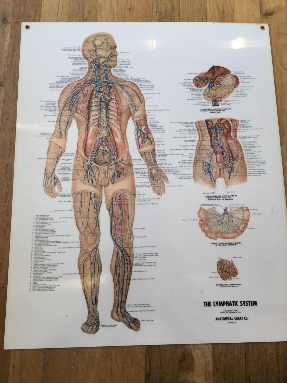 Groß Diagramm Des Fußanatomie Galerie - Anatomie Ideen - finotti.info