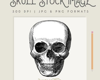 Vintage Skull Illustration Instant Download Digital printable picture clipart graphic transfer high resolution