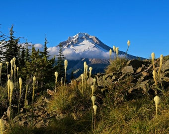 Bear Grass on Mt. Hood