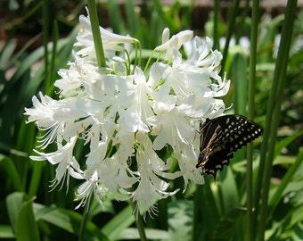 Butterfly on Flower 5, Child's Photo, 5x7 Photo, 8x10 Photo, 11x14 Photo, Child's Decor